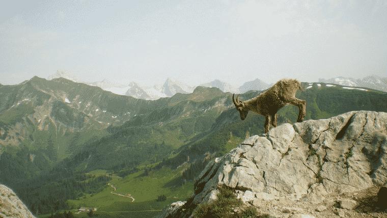goat_image